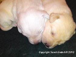 Some more of Ash's puppies